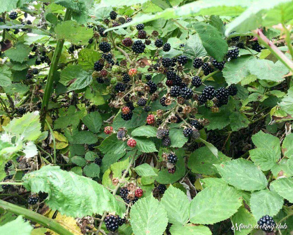crumble aux mûres - blackberry crumble